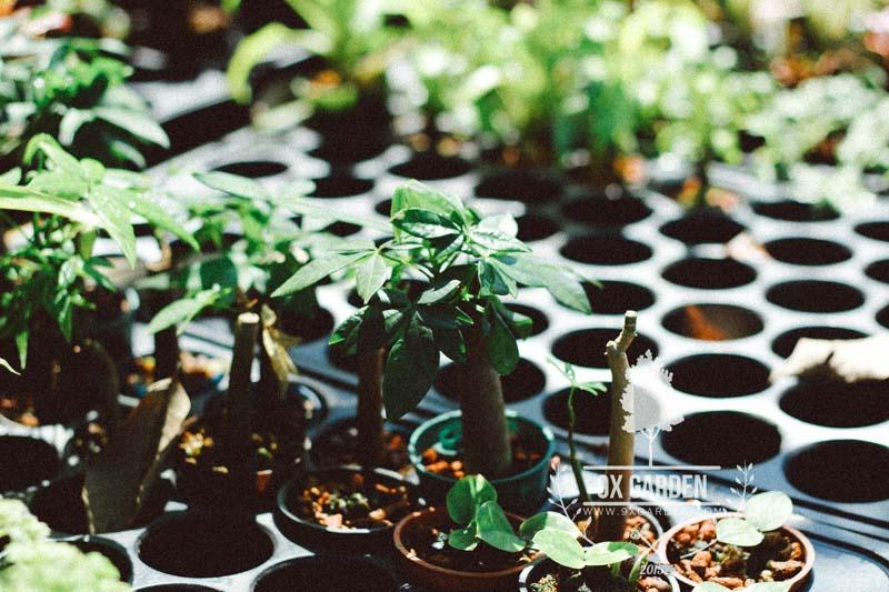 Cây không trồng đất 9X GARDEN