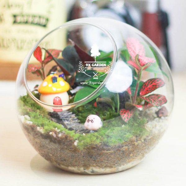 Tiểu Cảnh Để Bàn Terrarium Family & Home - 9X GARDEN