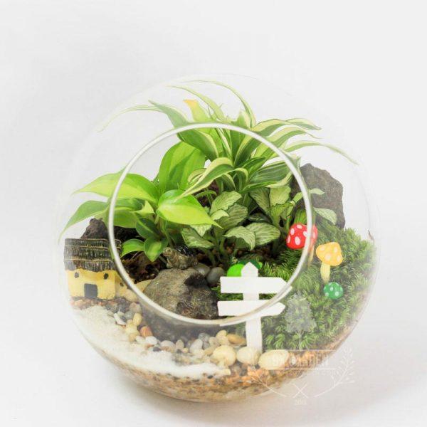 Tiểu Cảnh Để Bàn Terrarium Tropical Forest - 9X GARDEN