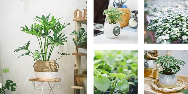 Plant Care - Hướng Dẫn Chăm Sóc Cây Xanh - 9X Garden