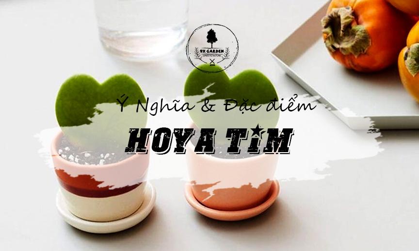 Ý Nghĩa & Đặc Điểm Cây Hoya Tim - 9X GARDEN