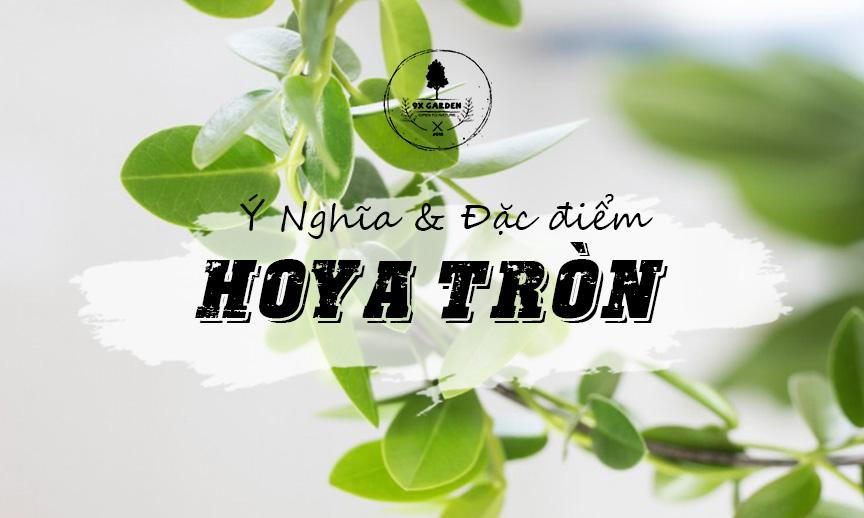 Ý Nghĩa & Đặc Điểm Cây Hoya Tròn - 9X GARDEN