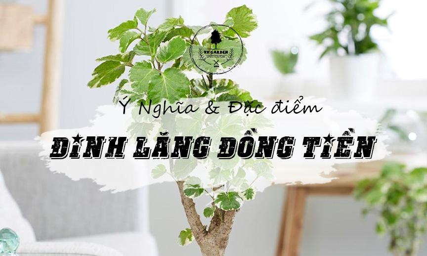 Ý Nghĩa & Đặc Điểm Cây Đinh Lăng Đồng Tiền - 9X GARDEN