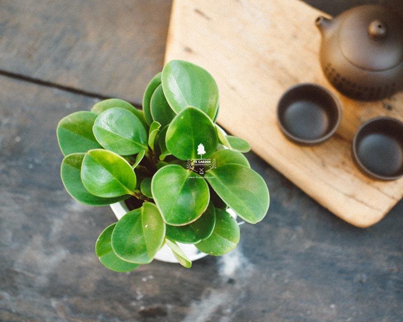 Tại sao chúng ta nên trồng cây xanh trong nhà? - 9X GARD