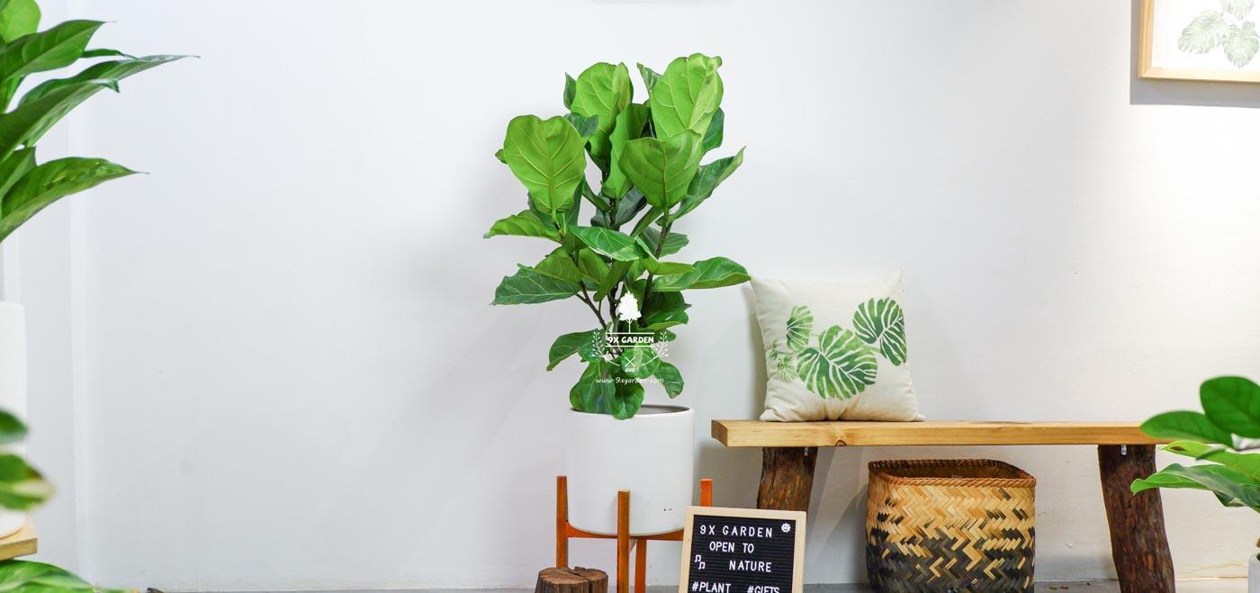 Tại sao chúng ta nên trồng cây xanh trong nhà? - 9X GARDEN