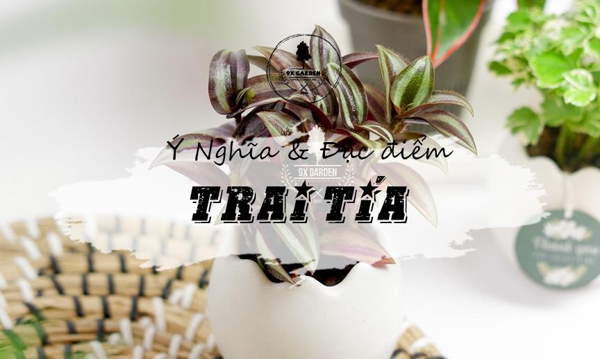 Plant Wiki: Cây Trai Tía