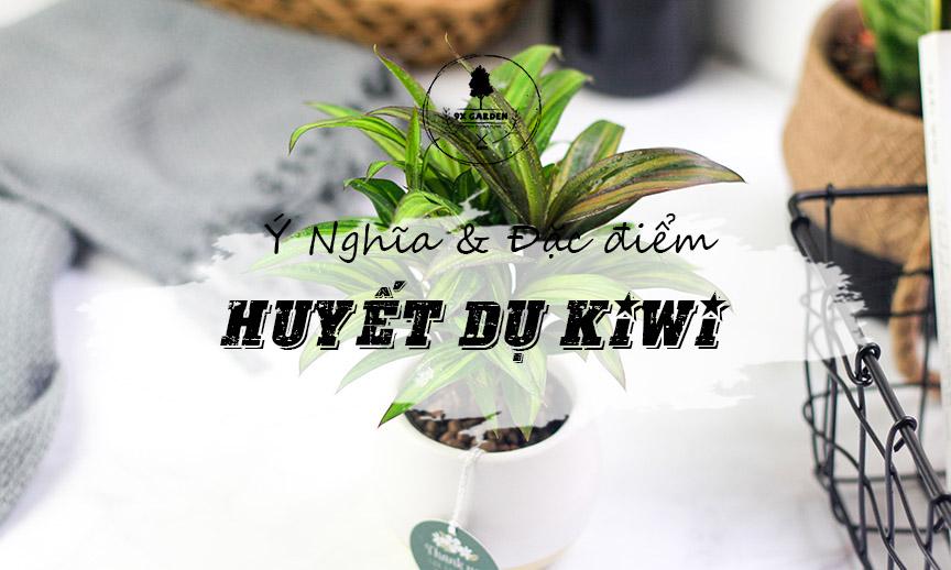 Ý Nghĩa Cây Huyết Dụ Kiwi - 9X GARDEN