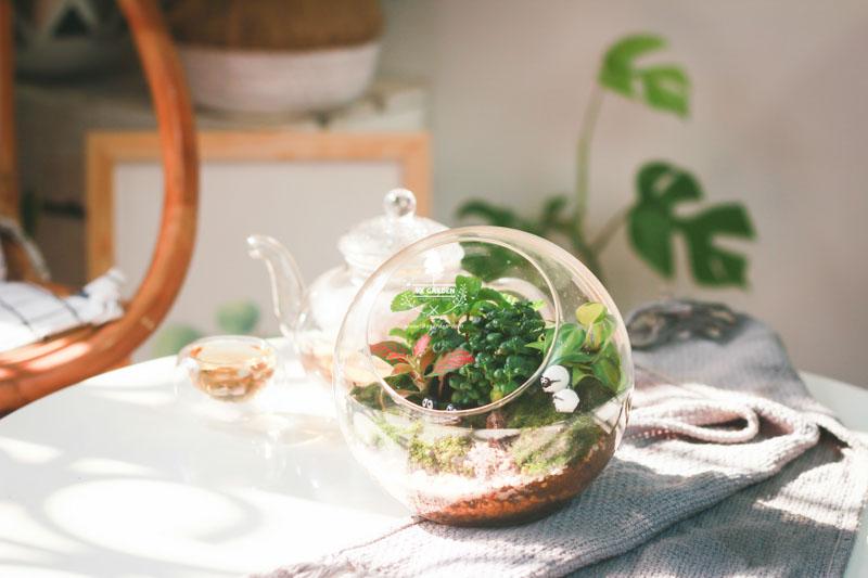 Tại sao cây xanh lại trở thành món quà hoàn hảo nh