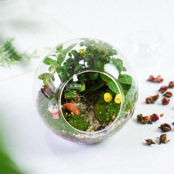Tiểu Cảnh Để BànTerrarium - Family & Home 003 - 9X GARDEN