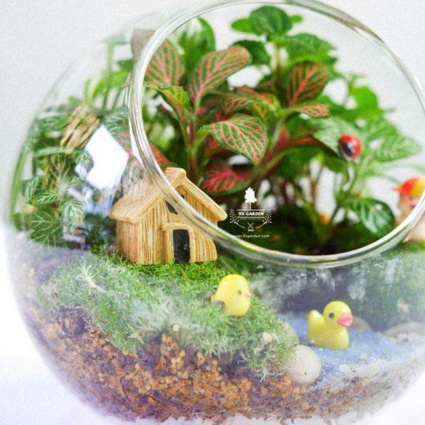 Tiểu Cảnh Để Bàn Terrarium - Family & Home 005 - 9X GARDEN