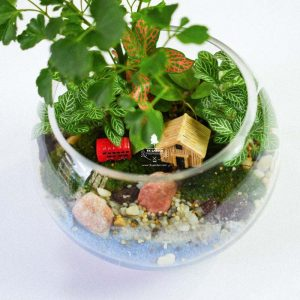 Tiểu Cảnh Để Bàn Terrarium - Family & Home 006 - 9X GARDEN