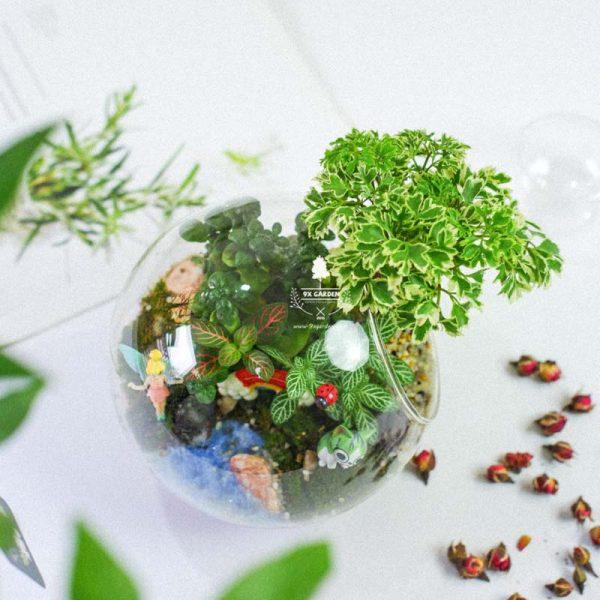 Tiểu Cảnh Để Bàn Terrarium - Tropical Forest 002 - 9X GARDEN
