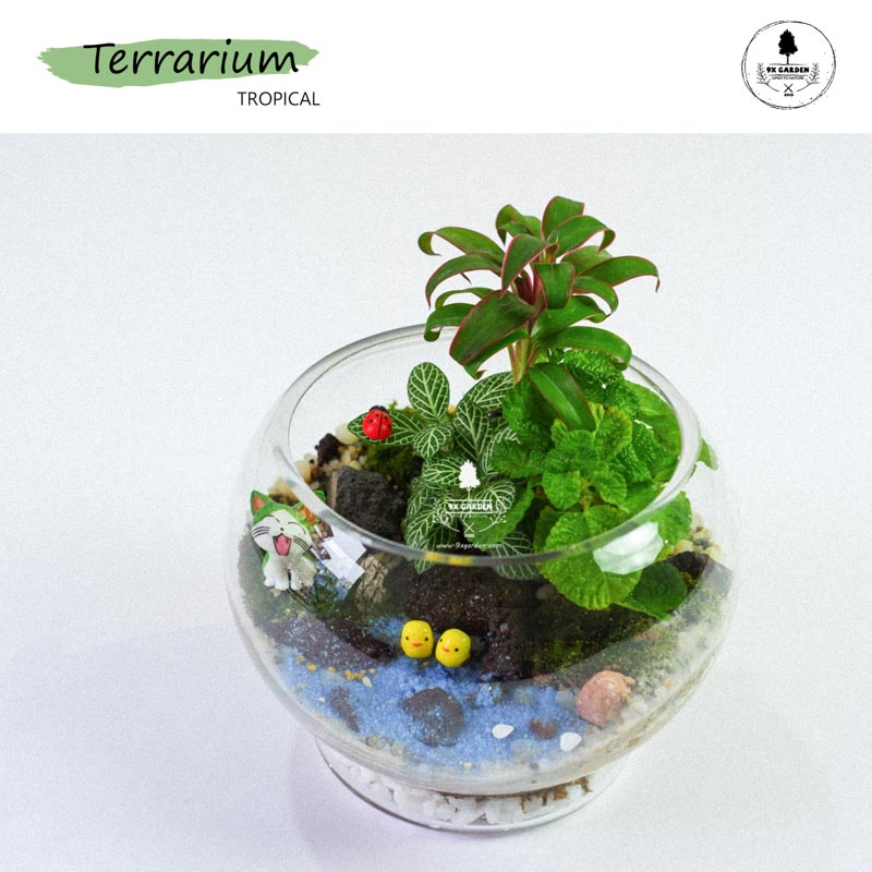 Tiểu Cảnh Để Bàn Terrarium - Tropical Forest 003 - 9X GARDEN