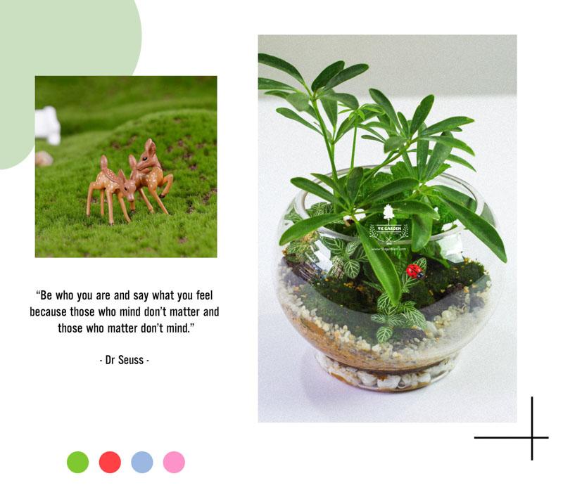 Tiểu Cảnh Để Bàn Terrarium - Tropical Forest 004 - 9X GARDEN