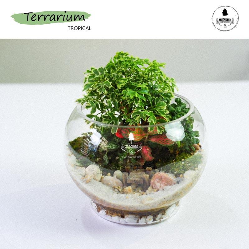 Tiểu Cảnh Để Bàn Terrarium - Tropical Forest 005 - 9X GARDEN