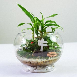 Tiểu Cảnh Để Bàn Terrarium - Tropical Forest 006 - 9X GARDEN