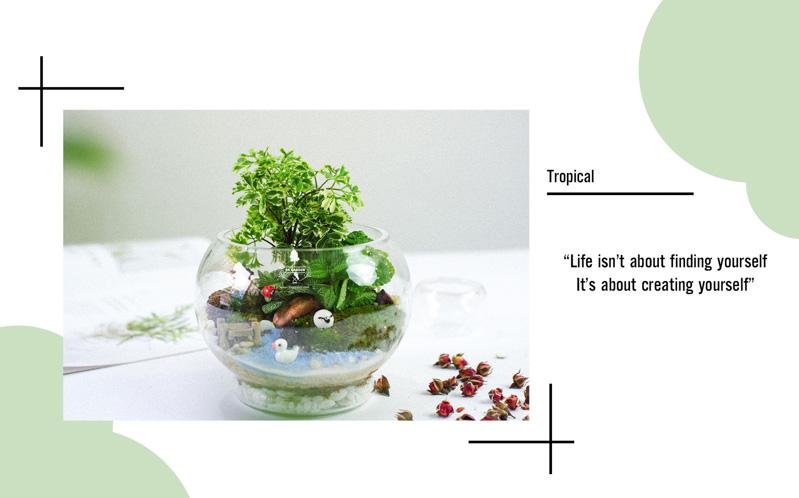 Tiểu Cảnh Để Bàn Terrarium - Tropical Forest 007 - 9X GARDEN