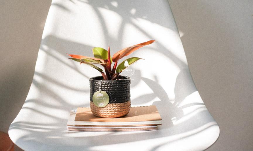 Tips Chọn Cây Cho Người Mới Chơi - 9X Garden