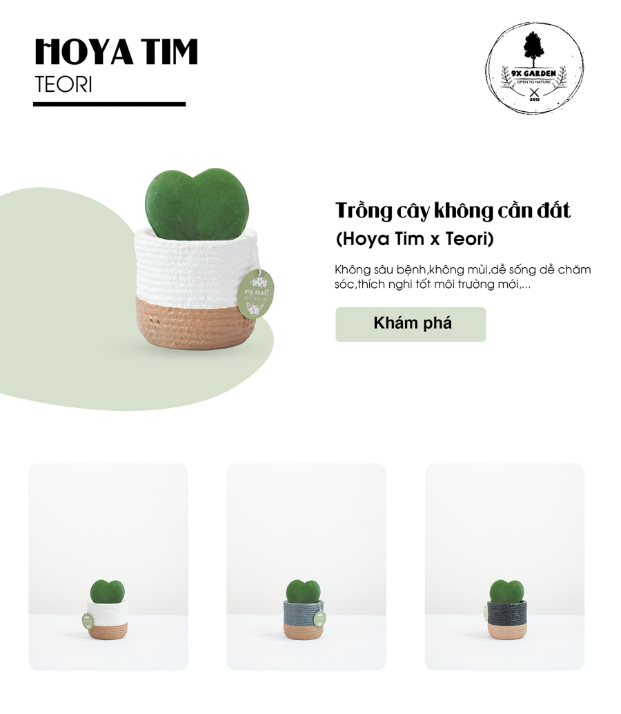 Hoya Tim x Teori - Cây Cảnh Để Bàn - 9X GARDEN