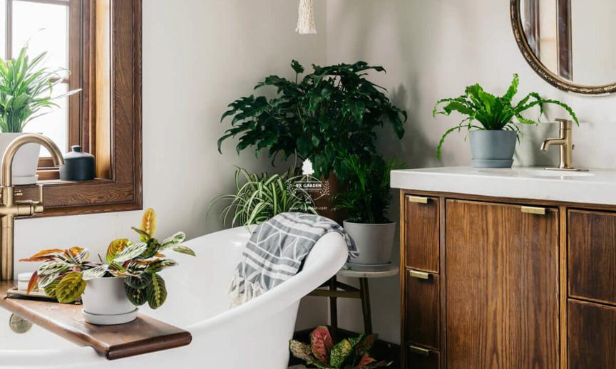 Tips chọn cây cảnh phòng tắm cho người yêu thiên nhiên - 9X GARDEN