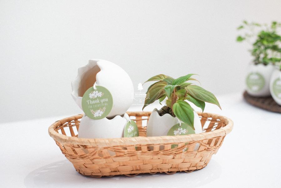 Trầu Bà Micans x Trứng Oasis - Cây Cảnh Mini Không CầTrầu Bà Micans x Trứng Oasis - Cây Cảnh Mini Không Cầ